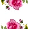 貴妃粉紅花